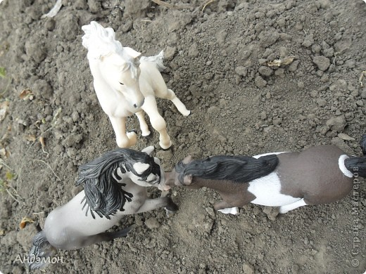 Вот три моих красавца жеребца на прогулке)) Коричневый: Исландский пони. Серый - Андалузкий жеребец) И белый: похож на Липизанскую лошадь. )) Не сказано было, так что утверждать не могу) фото 15