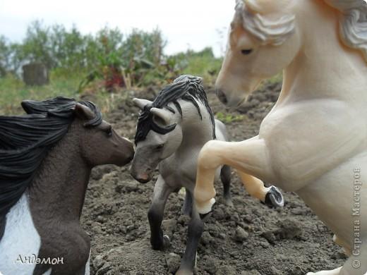 Вот три моих красавца жеребца на прогулке)) Коричневый: Исландский пони. Серый - Андалузкий жеребец) И белый: похож на Липизанскую лошадь. )) Не сказано было, так что утверждать не могу) фото 16