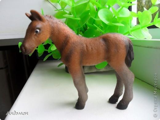 Вот три моих красавца жеребца на прогулке)) Коричневый: Исландский пони. Серый - Андалузкий жеребец) И белый: похож на Липизанскую лошадь. )) Не сказано было, так что утверждать не могу) фото 20