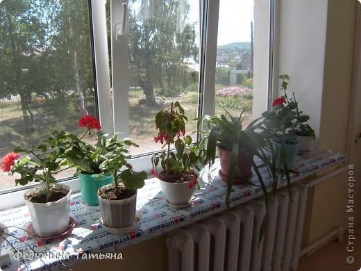 Школьные цветы фото 1