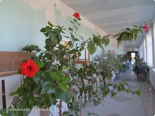 Школьные цветы фото 4
