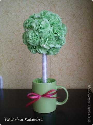 зеленое дерево фото 1