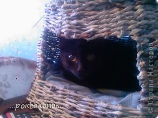 домик котейке фото 2