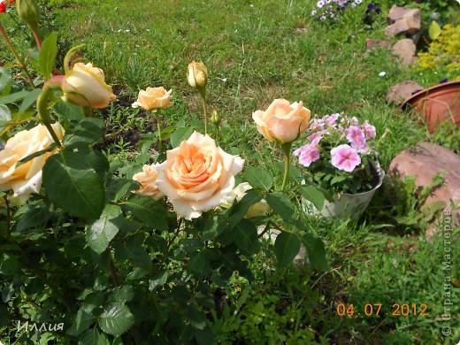Лето это маленькая жизнь. И вот я хочу поделиться с вами своей маленькой летней жизнью. И конечно первые это мои маленькие солнышки. фото 6