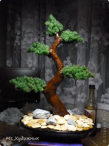 """""""Бонсай - дух Японии у тебя дома"""" фото 10"""