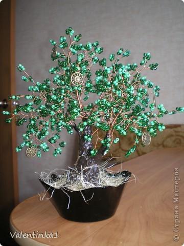 Цветущая сакура.  фото 5