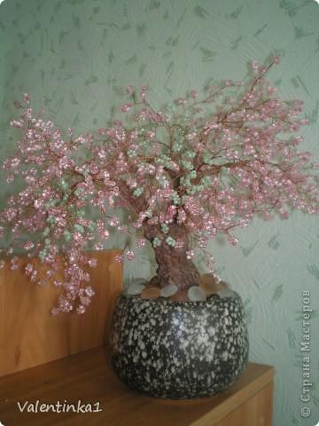 Цветущая сакура.  фото 2