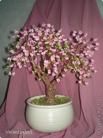 Цветущая сакура.  фото 1