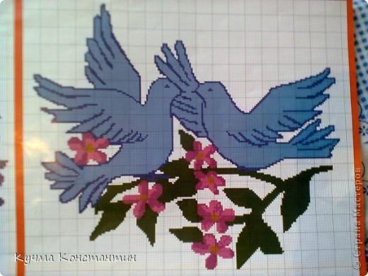 Вот такие голуби выглядят без голубого цвета! фото 2