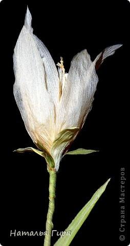 Лилия из талаша фото 1