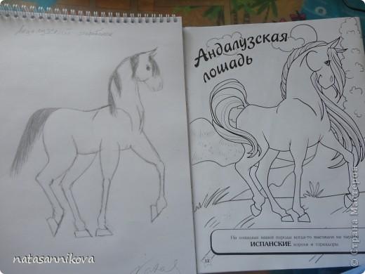 Рисуем молодого андалузского коня