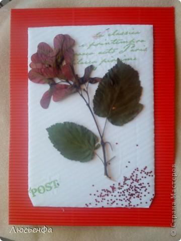 флора фото 2