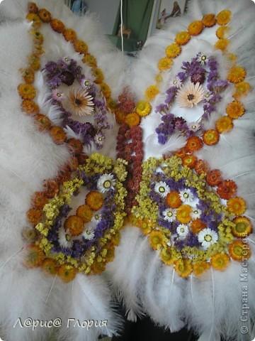 Бабочка сделана из природного материала, цветов-сухоцветов. перьев птиц и все приклеено на пенопластовую форму. фото 1