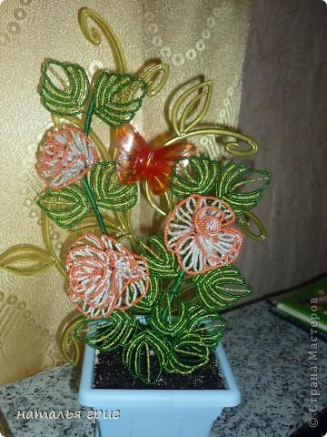 Розы для доченьки. фото 1