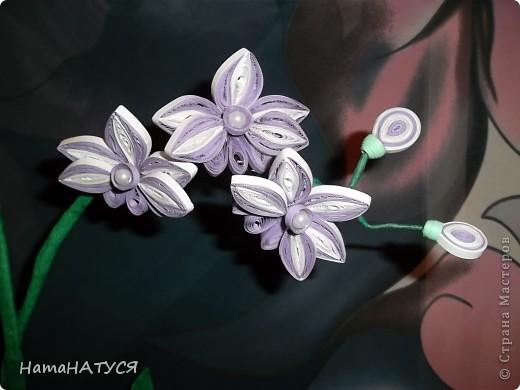 """Здравствуйте, уважаемые жители СМ. Я снова решила """"вырастить"""" орхидею, но на этот раз в горшочке. Приближается начало учебного года, времени для творчества будет не хватать. Вот я и решила """"побаловать"""" себя. Полюбились мне орхидеи. Много их на просторах СМ. На этот раз мне захотелось отойти от плоскостного квиллинга и выполнить объёмную работу. В целом работой осталась довольна. Особенно нравится цветовая гамма самих цветочков (бело-фиолетовый). Ну а об остальном судить Вам. фото 5"""