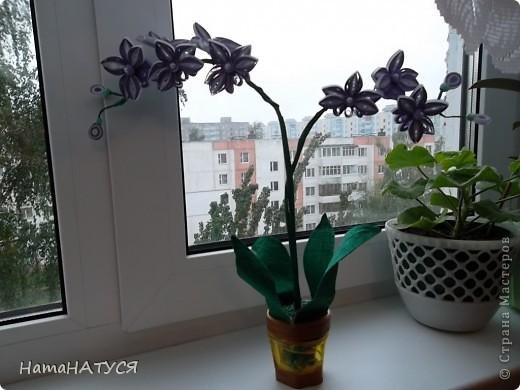 """Здравствуйте, уважаемые жители СМ. Я снова решила """"вырастить"""" орхидею, но на этот раз в горшочке. Приближается начало учебного года, времени для творчества будет не хватать. Вот я и решила """"побаловать"""" себя. Полюбились мне орхидеи. Много их на просторах СМ. На этот раз мне захотелось отойти от плоскостного квиллинга и выполнить объёмную работу. В целом работой осталась довольна. Особенно нравится цветовая гамма самих цветочков (бело-фиолетовый). Ну а об остальном судить Вам. фото 1"""