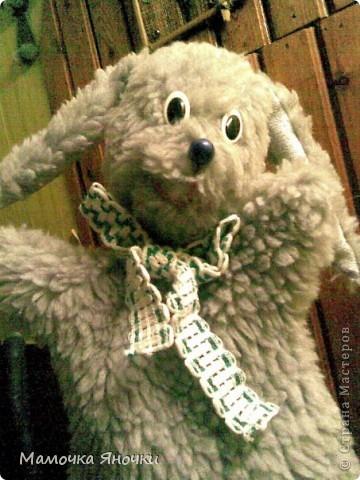 Заяц на руку фото 2