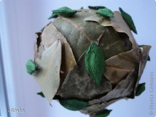 Здравствуйте, уважаемые! Недавно нашла на страницах СМ топиарий из лавровых листьев, и решила сповторюшничать) Идею стащила у Балеро, и нафантазировала чуть-чуть от себя, вот что получилось. фото 2