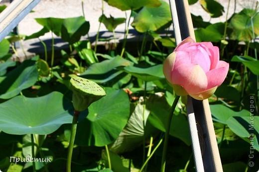 Вход в Ботанический сад Женевы фото 9