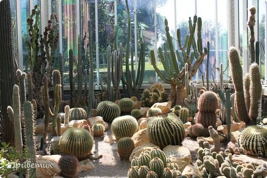 Вход в Ботанический сад Женевы фото 13
