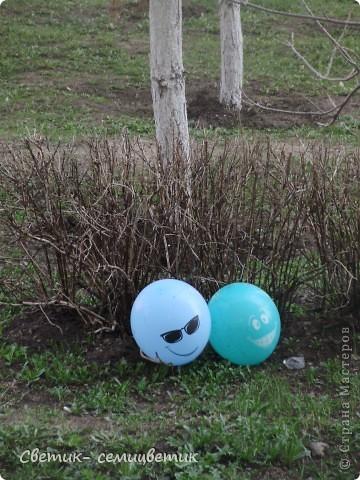 """Сегодня у нас под окном оказался очередной воздушный шарик. И я вспомнила, как весной мы наблюдали вот такую очаровательную пару Шариков. Никто их специально не выкладывал. Каким-то образом они прилетают к нам с разных торжеств и устраиваются отдыхать в кустарнике. Шарики потихоньку меняли свое положение. И мне удалось их сфотографировать """"лицом"""" к нам. фото 2"""