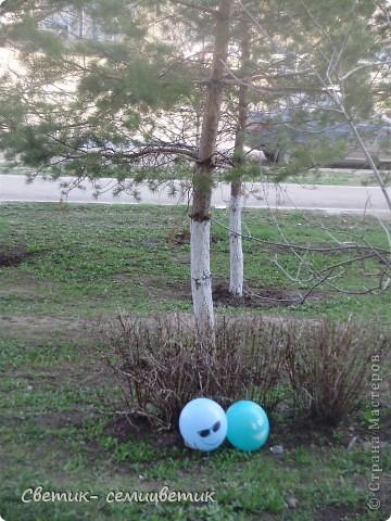 """Сегодня у нас под окном оказался очередной воздушный шарик. И я вспомнила, как весной мы наблюдали вот такую очаровательную пару Шариков. Никто их специально не выкладывал. Каким-то образом они прилетают к нам с разных торжеств и устраиваются отдыхать в кустарнике. Шарики потихоньку меняли свое положение. И мне удалось их сфотографировать """"лицом"""" к нам. фото 3"""