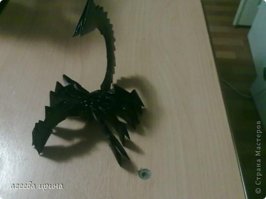 белый скорпион фото 3