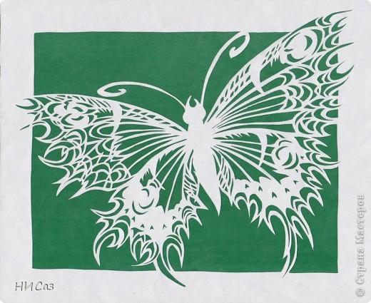 Бабочка фото 4