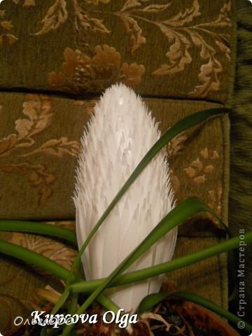 Как вам такой кактус? Он хоть и белый ,но вполне симпатишшшный :), а при желании можно и покрасить :) фото 7