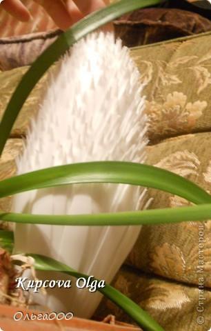 Как вам такой кактус? Он хоть и белый ,но вполне симпатишшшный :), а при желании можно и покрасить :) фото 8