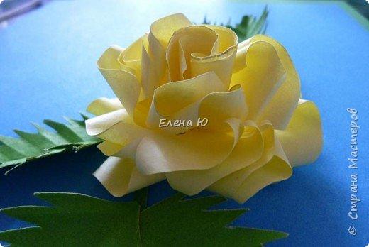 Розы из бумаги на скорую руку фото 22