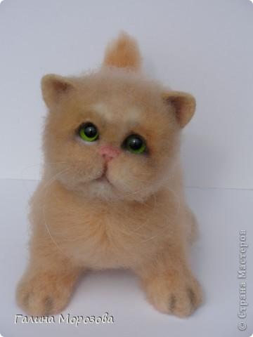Котенок фото 1