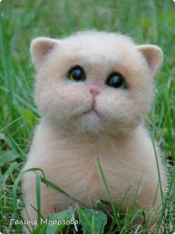 Котенок фото 3