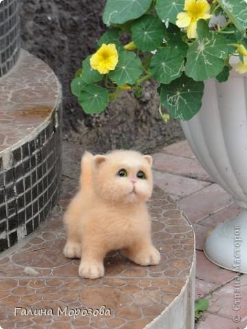 Котенок фото 4
