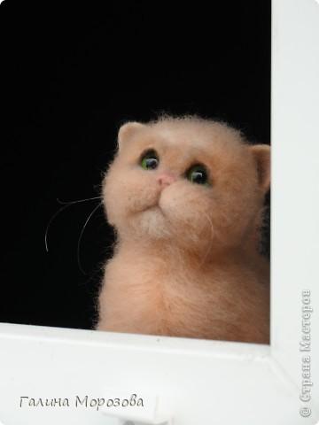 Котенок фото 7