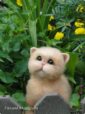 Котенок фото 5