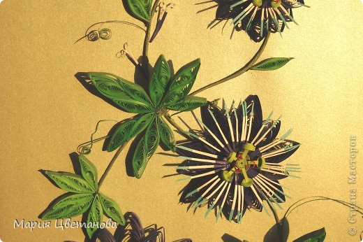 Пасифлора  - Passion flower фото 2