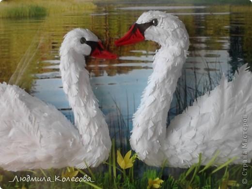 Этих лебедей я сделала ко дню рождения своей доченьки (по зороастрийскому гороскопу она родилась в год Лебедя). Для фона специально подобрала и распечатала фотографию - очень хотелось чтобы лебеди плавали по озеру. Надеюсь идея удалась. фото 2