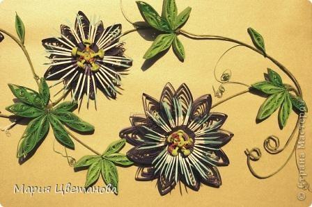 Пасифлора  - Passion flower фото 1