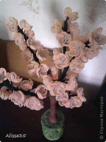 Вот такое персиковое дерево у меня выросло к маминому Дню рождения.