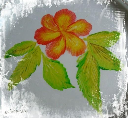 Новый цветочек. фото 1