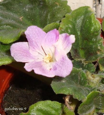 Новый цветочек. фото 6