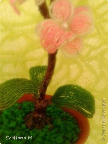 """Добрый вечер ,уважаемые жители С.М.!!!Хочу Вам представить орхидею, сделанна она совместно с моей ученицей, Светланой!!!Приготовили  ее на выставку к дню города!!!Родилась очень быстро, а вот собиралась не очень быстро !!!Не могла придумать долго название и решила,что назову ее """" Розовый Гламур"""". фото 3"""