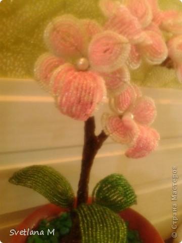 """Добрый вечер ,уважаемые жители С.М.!!!Хочу Вам представить орхидею, сделанна она совместно с моей ученицей, Светланой!!!Приготовили  ее на выставку к дню города!!!Родилась очень быстро, а вот собиралась не очень быстро !!!Не могла придумать долго название и решила,что назову ее """" Розовый Гламур"""". фото 2"""