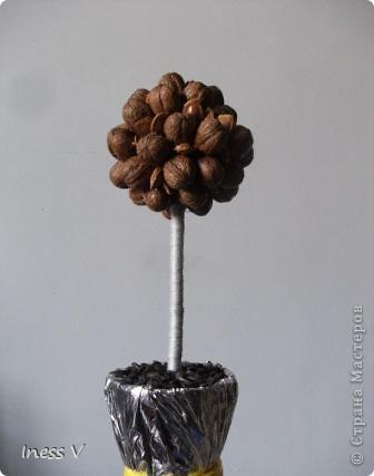 Ореховый топиарий  по примеру жительницы  страны   http://stranamasterov.ru/node/366937 !  фото 1