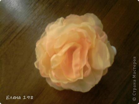 мой самый первый цветочек фото 9