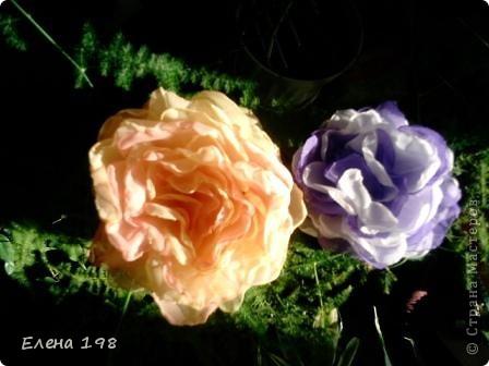 мой самый первый цветочек фото 7