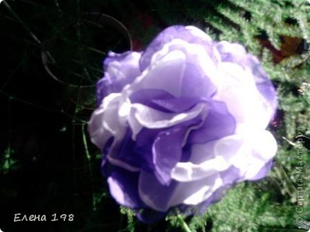 мой самый первый цветочек фото 6