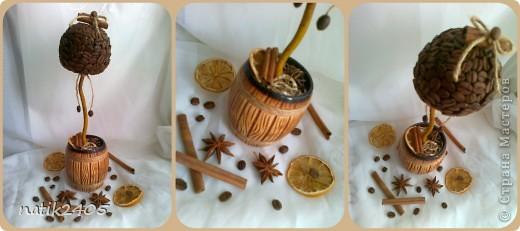 Добрый вечер, дорогие Мастерицы! Сделала еще одно кофейное деревце в подарок подруге!  фото 1