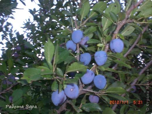 Здравствуйте все мастера и мастерицы! Приглашаю вас прогуляться по саду. Все фрукты спеют, вокруг красота! Всё это, мы с моим супругом вырастили сами. Желаю всем приятного просмотра, хорошего настроения!                                                                      фото 11